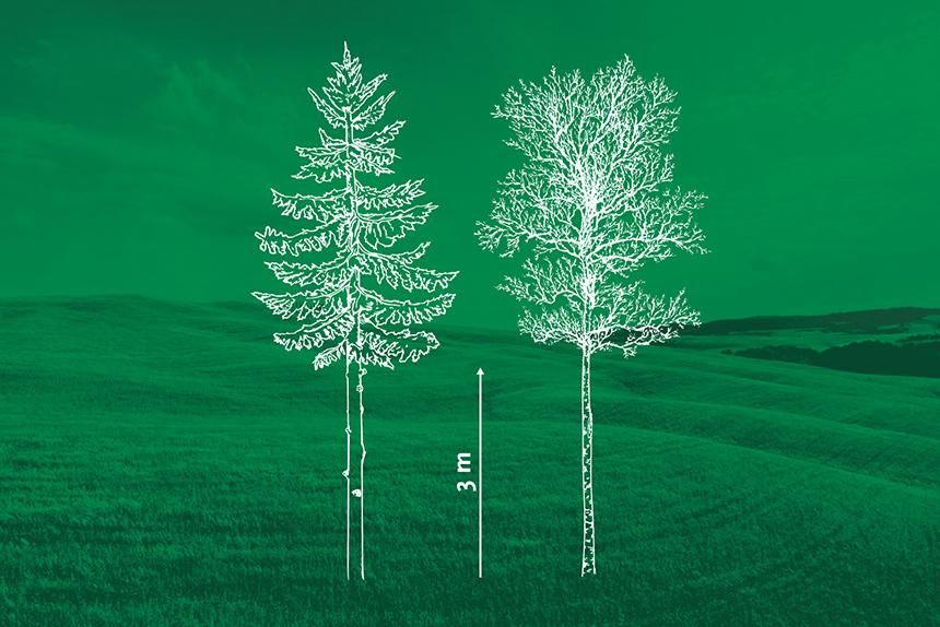Kasvavate puude laasimine. Rakvere Metsaühistu
